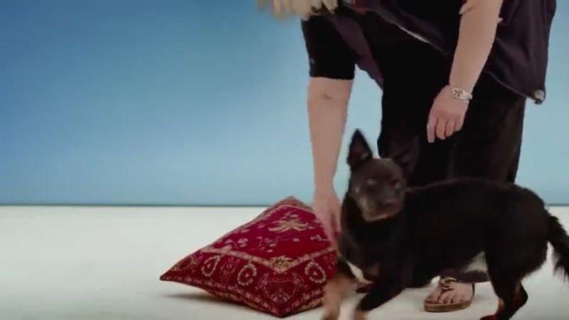 Möbel Pfister Top Care Medina | Dogs On Camera