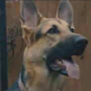 Dog Boy Film