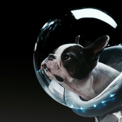 Boston Terrier stars in Renault TV Commercial