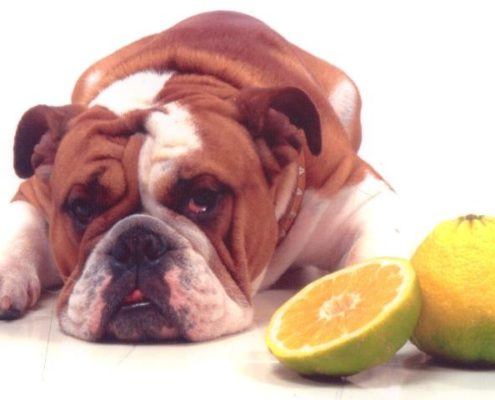 George Bull Dog Ugly Fruit
