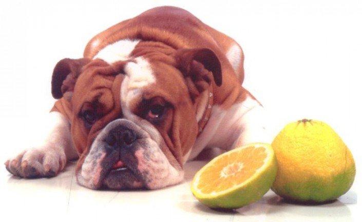 George Bull Dog Ugly Fruit