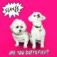 Hugger Bichon and Ellie poodle Slaves Album Cover