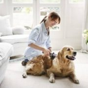 Leo Golden Retriever Dyson Shoot