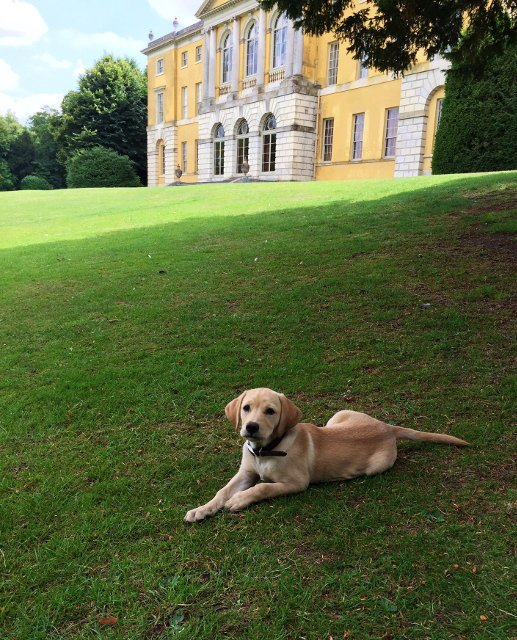 Maggie the Labrador at Downton Abbey 3