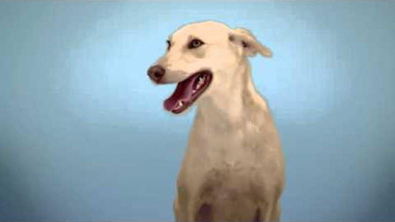 Möbel Pfister Top Care Sandrina | Dogs On Camera
