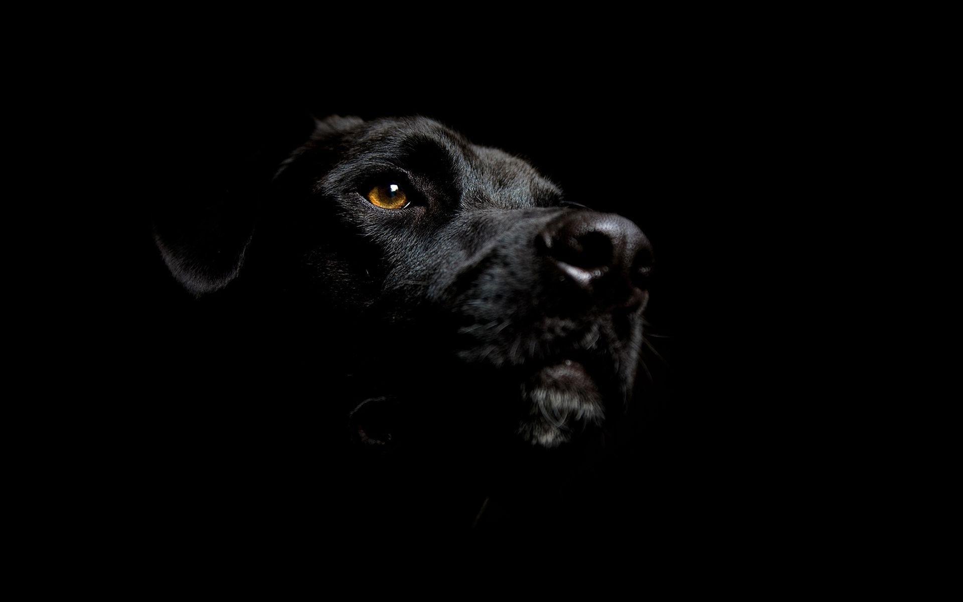 Black dog head
