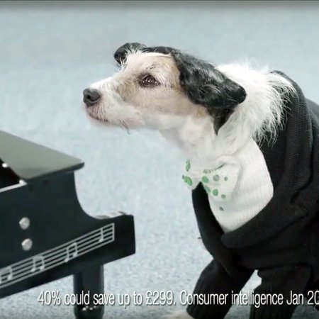 Gocompare com New Advert April 2013 Dog Piano
