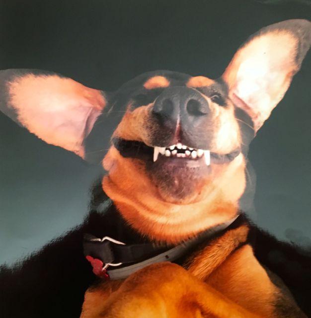 Nellie the Bloodhound