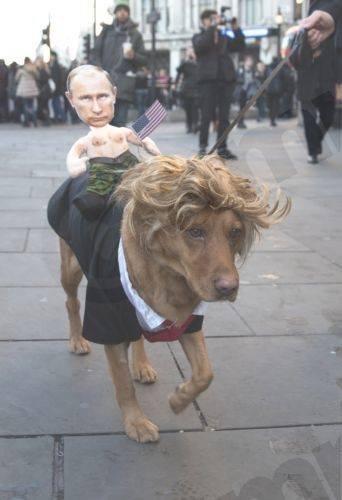 Trump Dog
