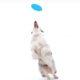 NexGard Digital Video – Frisbee