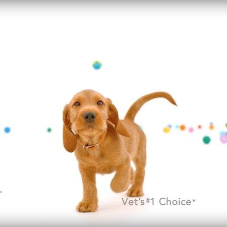 Nexgard Digital Video Puppies Dogs On Camera