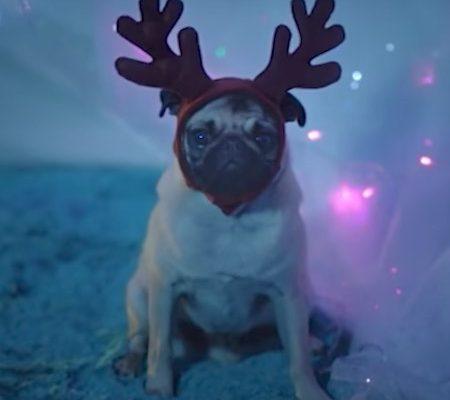 Ernie the Pug Reindeer
