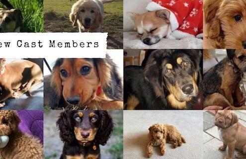 New Cast Members