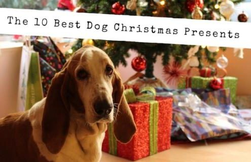The 10 Best Dog Christmas Presents