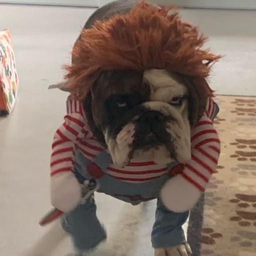 Ronnie the Bulldog